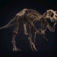 Bộ xương khủng long bạo chúa đạt mức đấu giá cao ngất ngưởng 32 triệu USD